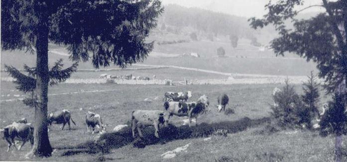 Bylo zde před válku 39 koní, 235 skotu a 12 koz. Ve vesnici byl větrný mlýn.